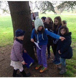 Step 5 3rd class sharing learning with Junior Infants on their Tree Trail D100 (2)