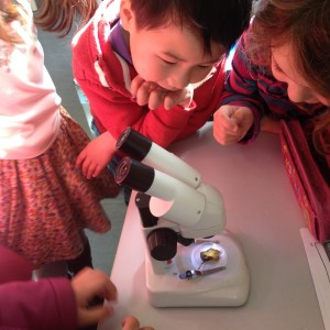 Step 5 6th class share science learning about microscopes with 1st class D100